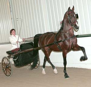 Tiffani Banaszak & her American Saddlebred, Intoxicating Gypsy