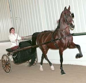 Tiffani Banaszak & her American Saddlebred, Intoxicating Gypsy